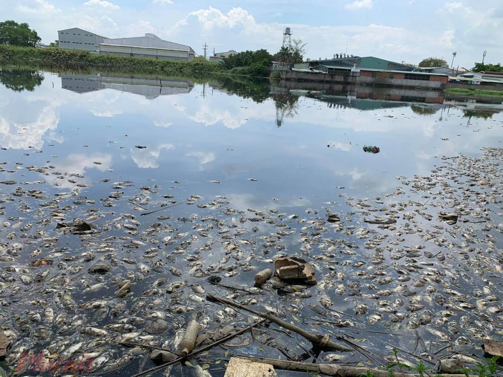 Theo cư dân, thời điểm xảy ra hiện tượng cá chết, nước trong hồ có màu đen đặc quánh. Xung quanh hồ nước có rất nhiều cơ sở sản xuất nên người dân nghi ngờ cá chết là do nguồn nước bị ô nhiễm bởi chất thải.