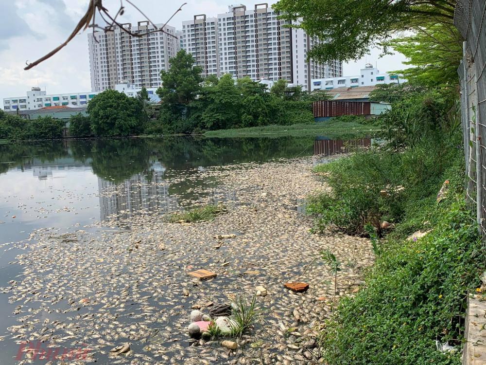 Phản ánh với Báo Phụ nữ TPHCM, người dân cho biết, hiện tượng cá chết hàng loạt xảy ra tại một hồ nước tự nhiên khá lớn, gần Block A3, A4 của chung cư Ehome 3, phường An Lạc, quận Bình Tân.