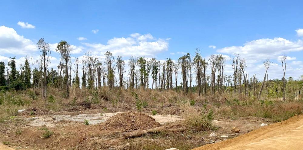 Đất đai ở khu vực hồ Sông Ray, H.Cẩm Mỹ, tỉnh Đồng Nai bị bỏ hoang sau khi giá đất tăng cao - Ảnh: B.Trần
