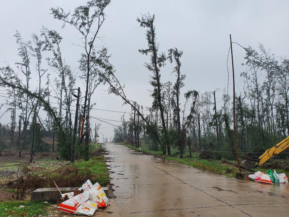 Rừng phòng hộ ven biển huyện Mộ Đức ngày càng teo tóp do các dự án băm dần. Trong đợt mưa bão cuối năm 2020, những rừng dương lâu năm này bị bão xé toạc, đổ gãy.