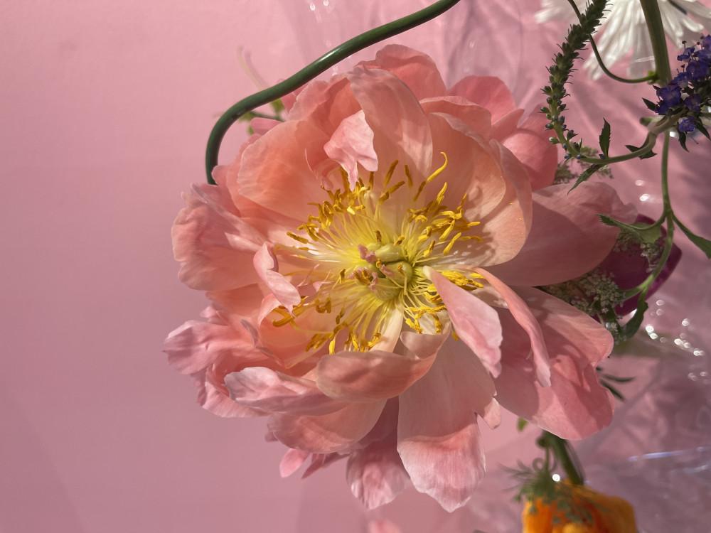 Cận cảnh một bông hoa mẫu đơn nở to trong tác phẩm Plus 3. Anh Nam cho biết hoa này thường dành cho mùa thu.
