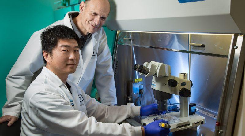 Giáo sư Juan Carlos Izpisúa Belmonte cùng một đồng nghiệp người Trung Quốc tại Viện - Ảnh: SIPA US