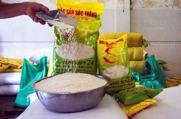 hai loại gạo ST24 và ST25 của Việt Nam đã bị 5 DN Mỹ đăng ký bản quyền ở Mỹ.