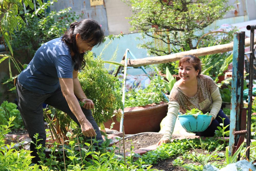 Thời gian qua, phụ nữ phường Trường Thọ đã cùng nhau trồng rau dọc theo các tuyến đường, tuyến hẻm và biến
