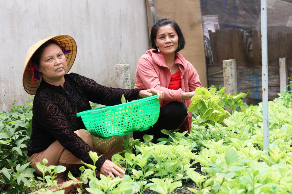 Bà Sáu và chị Thơ trong vườn rau xanh mát tại khu nhà trọ