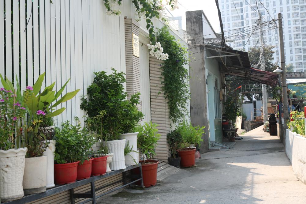 Những tuyến đường sạch sẽ, có nhiều cây xanh và hoa là mục tiêu của Hội LHPN phường Trường Thọ.