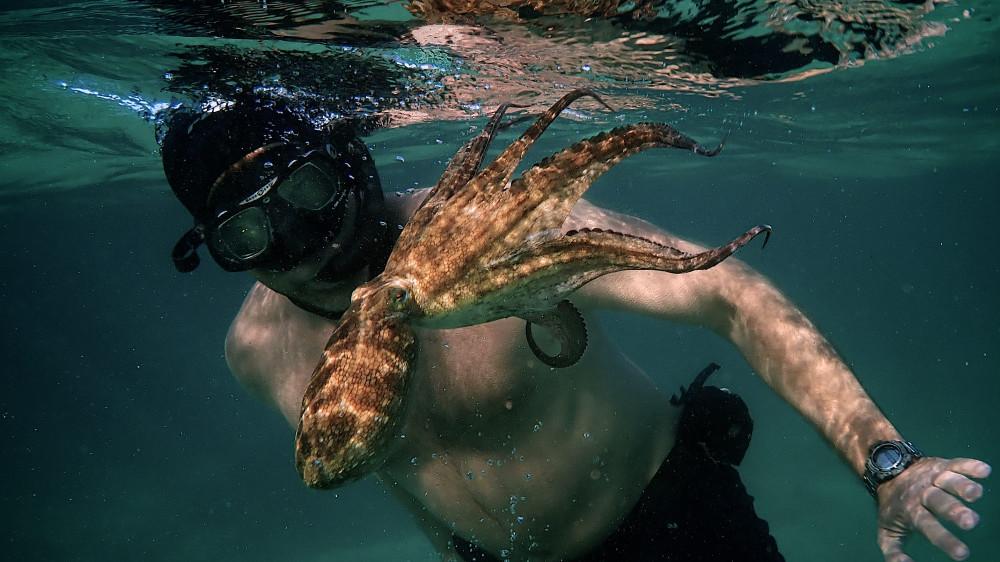 Người đàn ông tên Craig Foster dành một năm theo dõi vòng đời của con bạch tuộc.