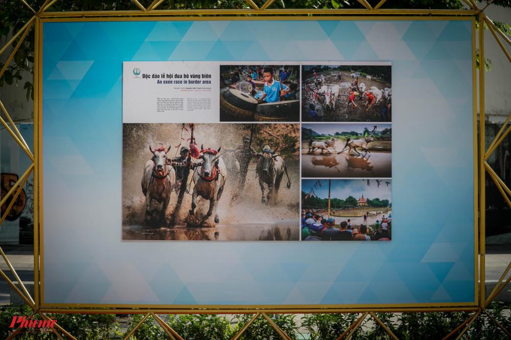 Bộ ảnh Độc đáo, Lễ hội đua bò vùng biên