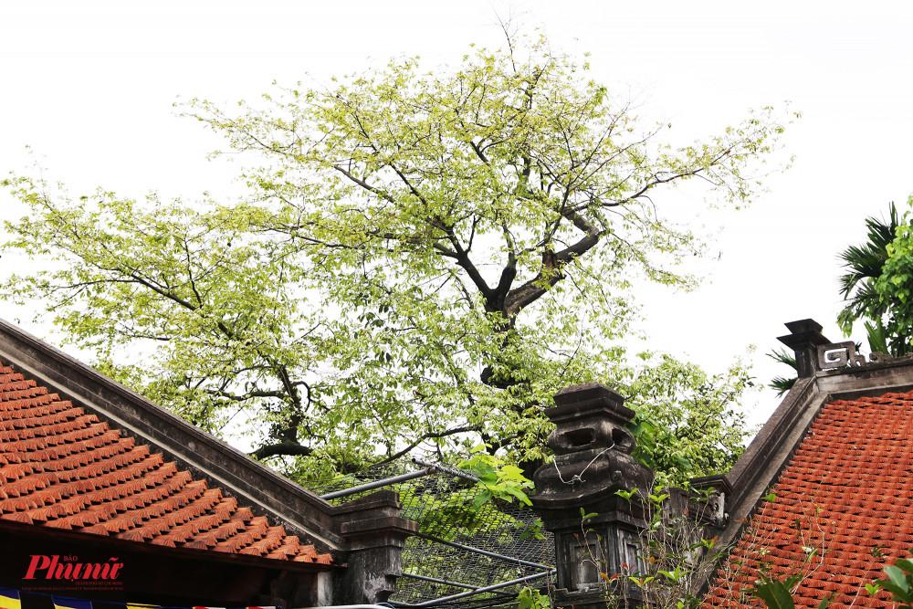 Một góc nhỏ trông cổ kính nhưng cũng không kém phần thơ mộng trong chùa.