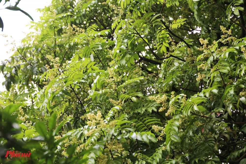 Cận cảnh hoa lá xanh tốt bên trong khuôn viên chùa.