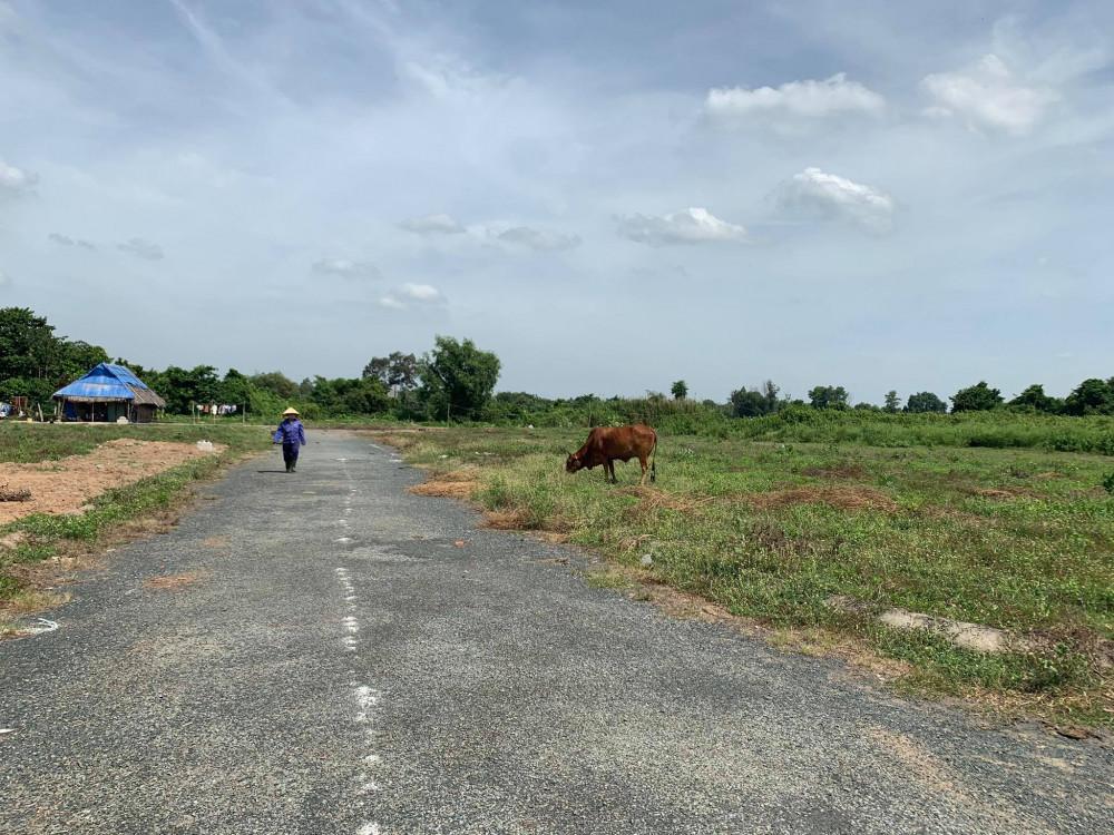 Người phụ nữ sống sát bên tận dụng đất dự án bỏ không để chăn nuôi bò
