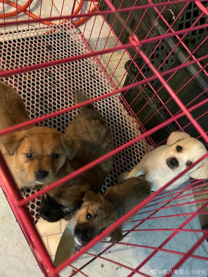 Một số con vật được giải cứu hôm 3/5 hiện đang ở ạm tại nơi trú ẩn của CAAR, chờ đợi ngôi nhà mới tốt hơn