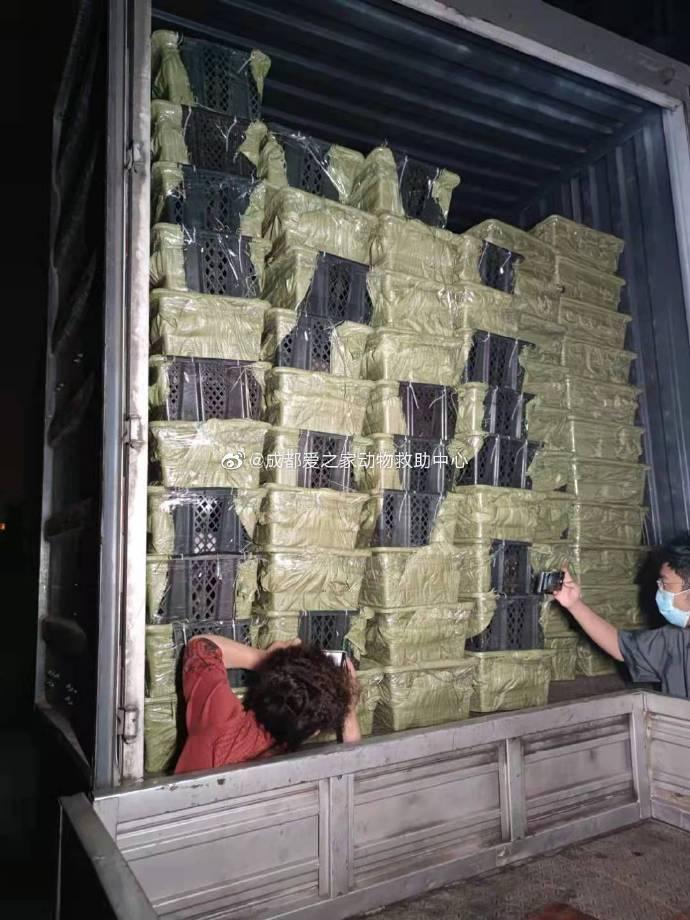 Chuyến xe chở đầy những chiếc hộp bí ẩn đựng chó mèo ở Thành Dô