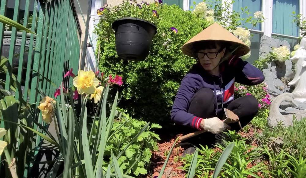 Nghệ sĩ Phương Hồng Thuỷ trong clip mới nhất với nội dung chăm sóc vườn hoa nhận được sự quan tâm của khán giả