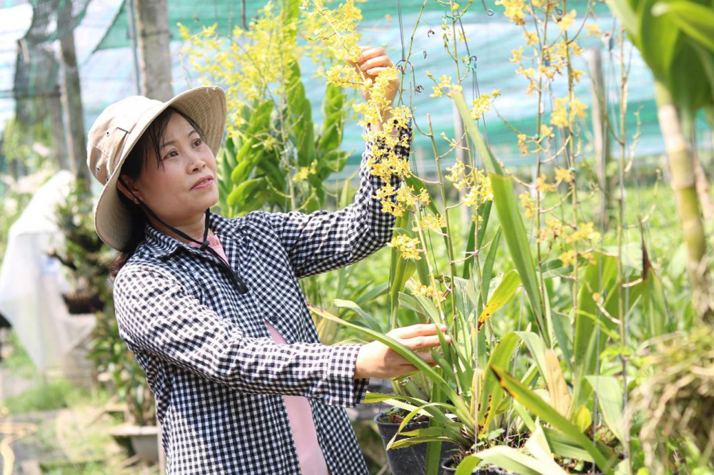Từ chỗ phụ thuộc nguồn giống nhập khẩu, hiện chị Trần Thị Ngọc Thảo đã chủ động được khoảng 20 - 30%  cây giống