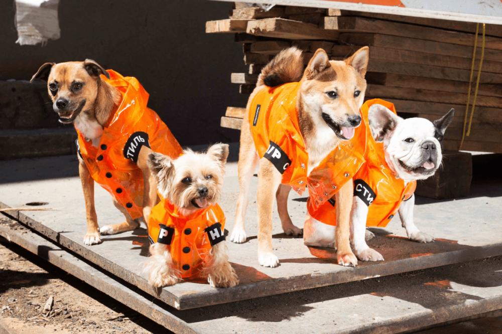 Áo hoodie, áo khoác dành cho cún có giá khoảng 200 USD (hơn 4,6 triệu đồng).