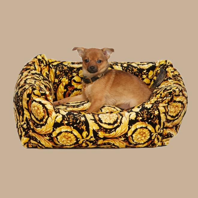 Không khó để nhận ra hoạ tiết đặc trưng của Versace trên chiếc đệm nằm của chú cún này. Chúng được bán với giá 1.373 USD (gần 32 triệu đồng).