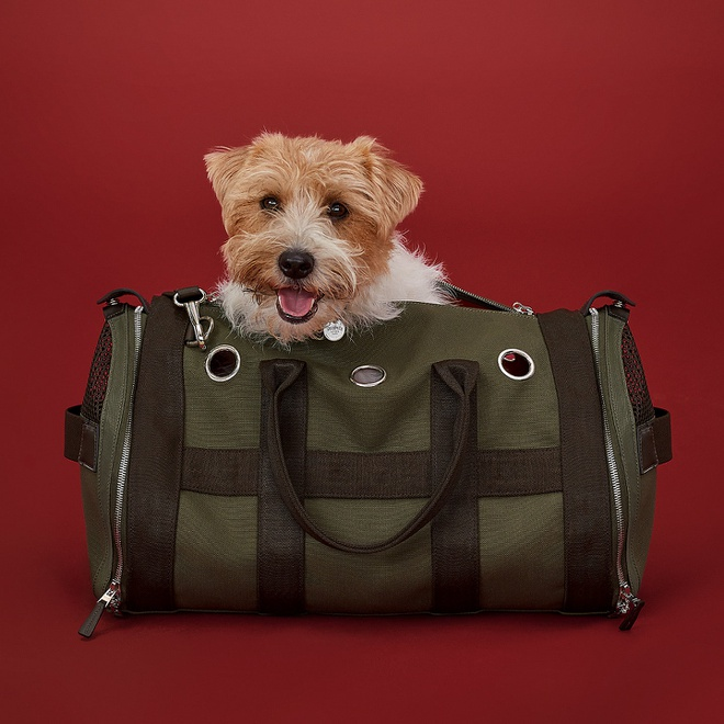 Đây cũng là một sản phẩm của Hermes dành cho thú cưng. Chiếc túi có màu xanh rêu, kiểu dáng đơn giản có giá 2.750 USD (hơn 63 triệu đồng). Túi được làm bằng vải cotton, polyamide và polyurethane, có những chiếc lỗ thoát khí được khoét dọc dây kéo.