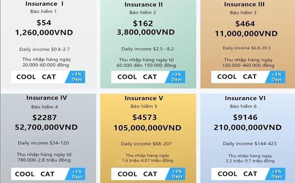 Gói bảo hiểm và lãi suất của Coolcat đã sập.Ảnh một nhà đầu tư cung cấp.