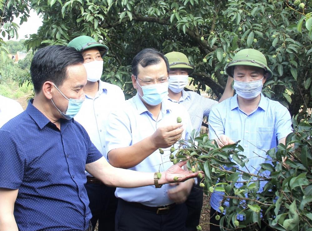 Bắc Giang đang lên kế hoạch để đón các thương nhân Trung Quốc nhập cảnh tới mua vải.