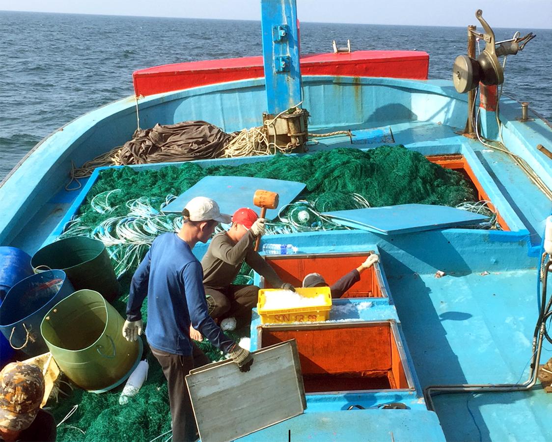Bạn chài trên tàu của anh Phong cho cá vào hầm ướp lạnh  trước khi vào bờ (ảnh do anh Phong cung cấp)