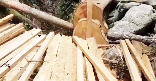22.990 m2 rừng tự nhiên đã bị tàn phá khiến 2 người bị khởi tố, 3 người bị phạt gần 250 triệu đồng