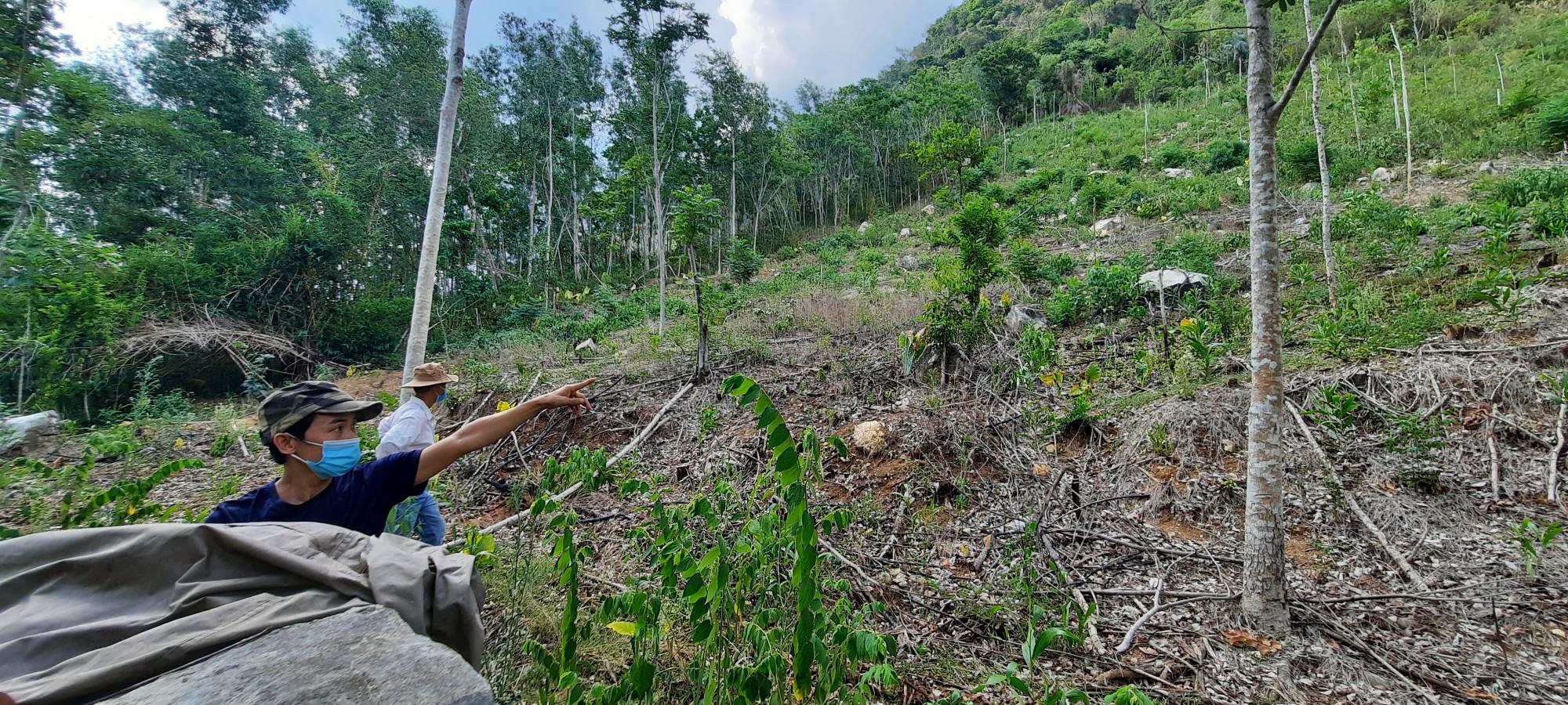 Những hộ dân tại đây cho biết, may mắn là có những cây gỗ khá lớn phía sau nhà họ, ngăn cản đá lăn xuống chứ không hậu quả rất khó lường