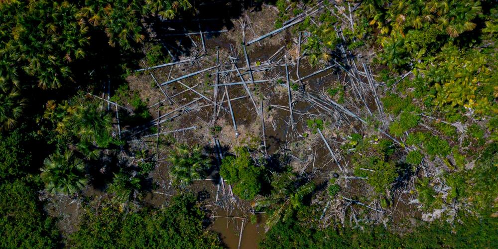 Ảnh chụp từ máy bay cho thấy một khu vực rừng Amazon bị đốn hạ gần thị trấn Melgaco - Ảnh: AFP