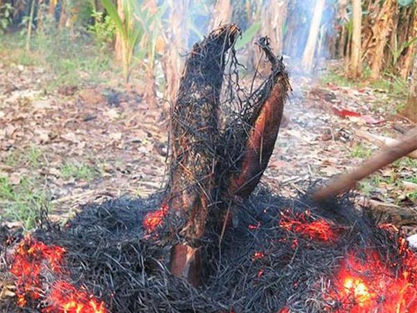 Lấy một cây dài, một đầu xiên vào bụng cá, một đầu cắm xuống đất rồi chất lá và cânh khô xung quanh - ảnh internet.