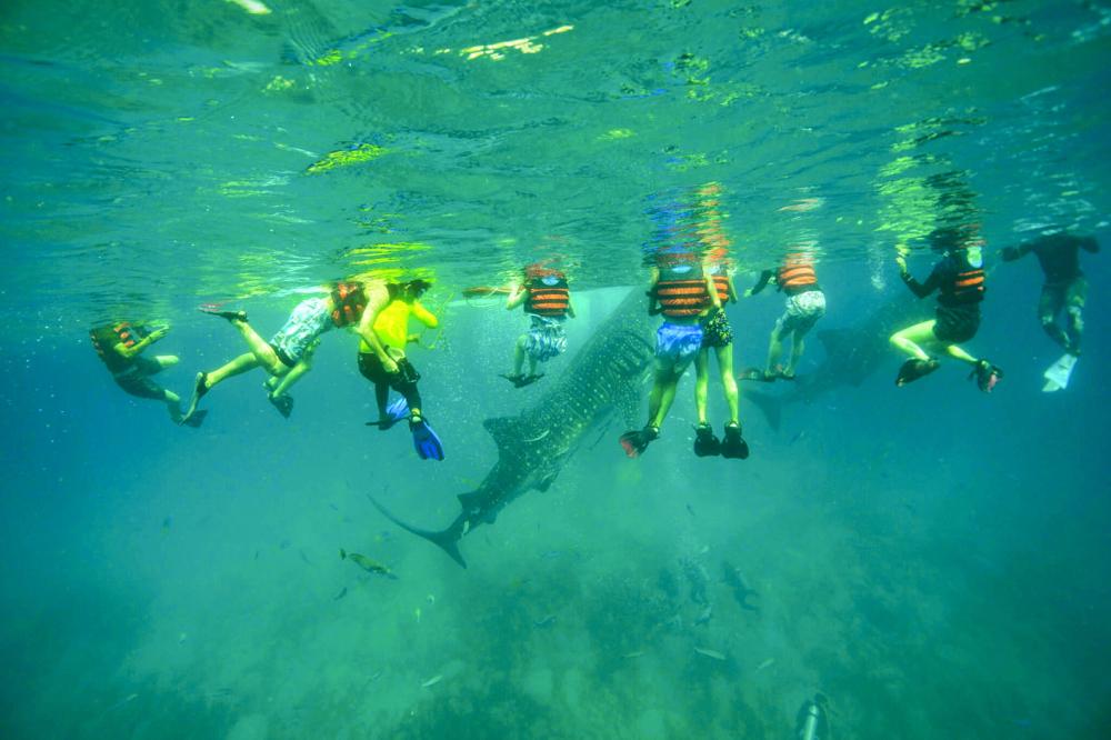Ở khu vực Monkey Mia tại vịnh Cá mập, Úc, khách du lịch chỉ được phép cho ăn đối với từ 2-5 con cá heo cái đã được xác định trong số hàng ngàn con nơi đây