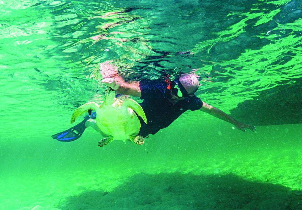 Một con rùa biển xanh ở Eleuthera, Bahamas đã nhầm du khách với thức ăn