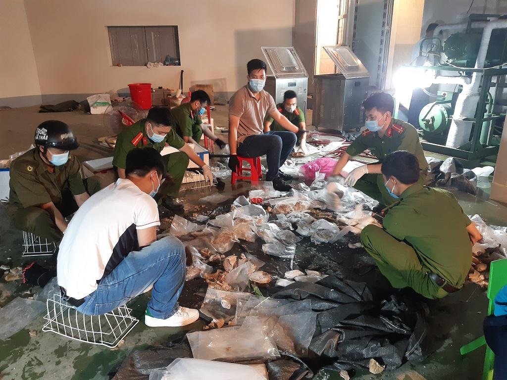 Các đối tượng giấu hàng trăm kg ma túy trong dạ dày lợn để xuất khẩu ra nước ngoài, gắn chip định vị theo dõi…