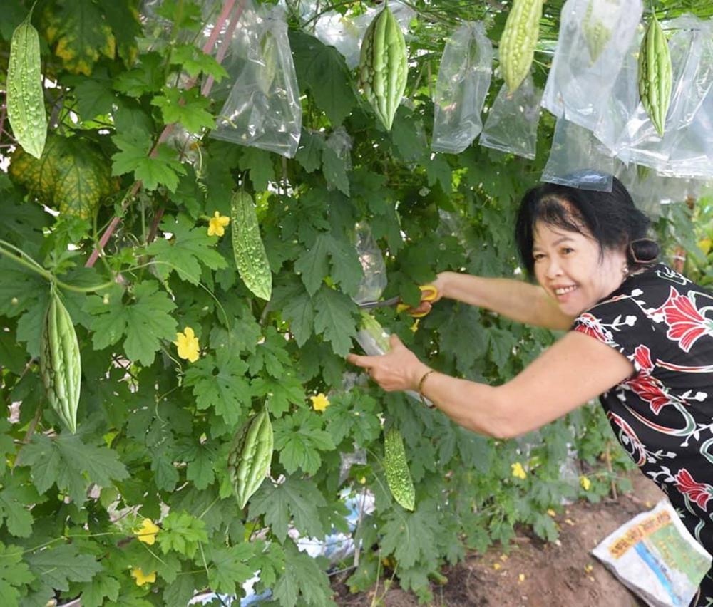 Góc vườn của vợ chồng cô Huê với rất nhiều hoa trái