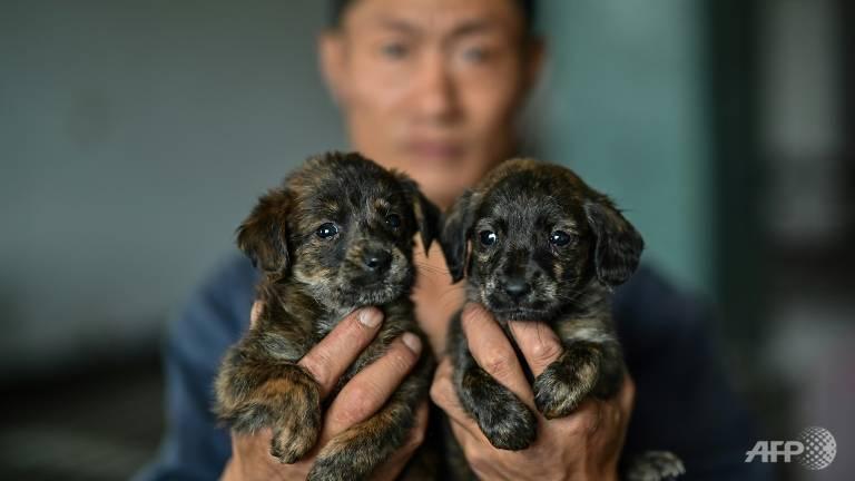 Trào lưu nuôi thú cưng kết hợp cùng đại dịch khiến nhiều động vật bị vứt bỏ ra đường phố trong vài năm qua