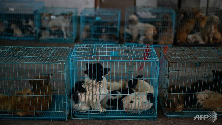 Hàng trăm con chó đã được thầy và nhà hảo tâm tái định cư ở nước ngoài