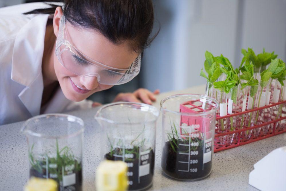 Nhiều cuộc nghiên cứu của các cơ quan khoa học, kể cả Nasa đều cho thấy dù không thể chứng minh 100% khả năng lọc sạch không khí cũng như loại bỏ độc tố trong nhà từ cây xanh nhưng về khả năng lọc sạch cũng như loại bỏ độc tố của
