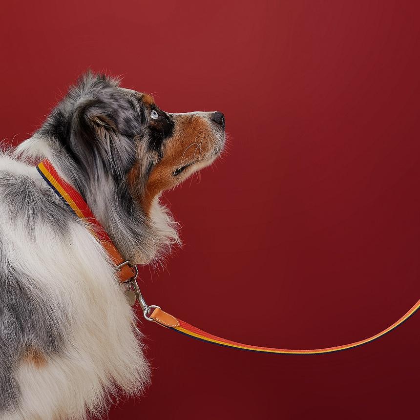 Dây xích Rocabar Dog Leash được Hermes bán với giá 18 triệu đồng. Mẫu phụ kiện trông nổi bật với bản phối màu đặc trưng của thương hiệu.