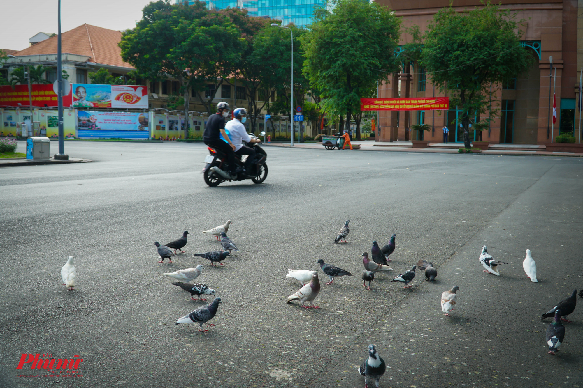 Nhiều người tỏ ra khá thích thú khi đến rất gần mà những chú chim bồ câu không hề sợ