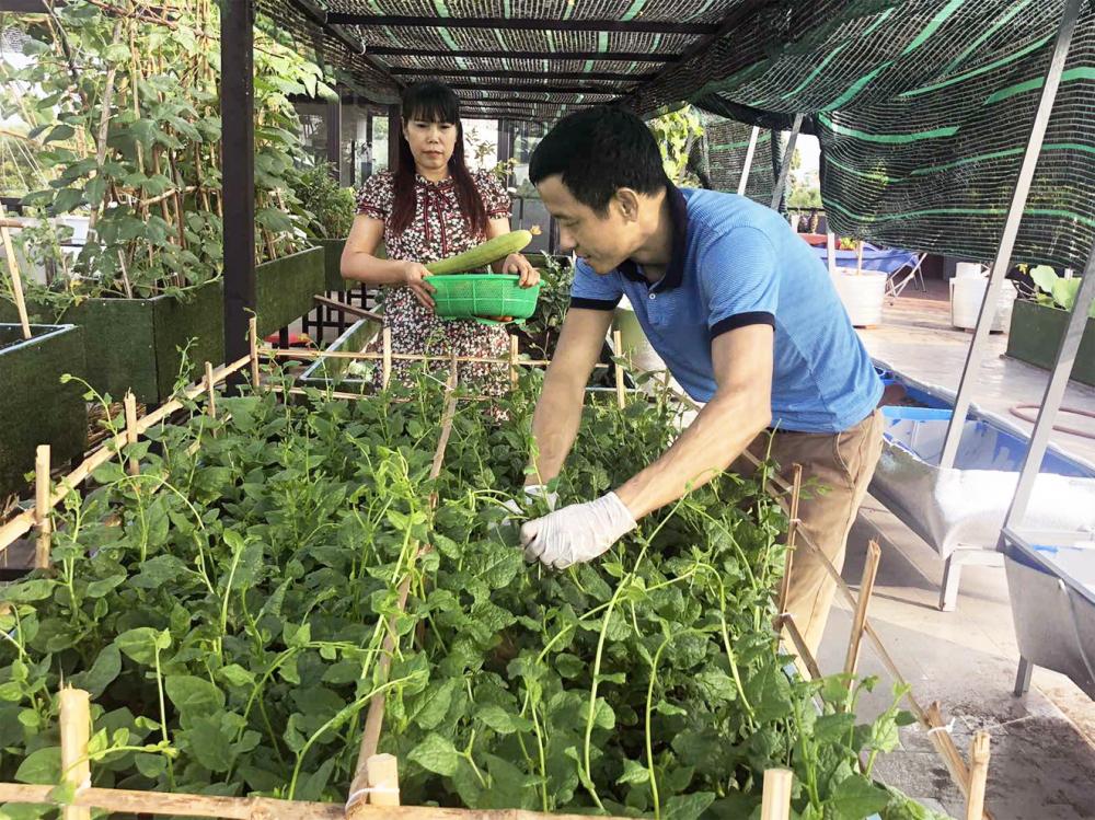 Vườn rau rộng 300m2 của anh Huynh