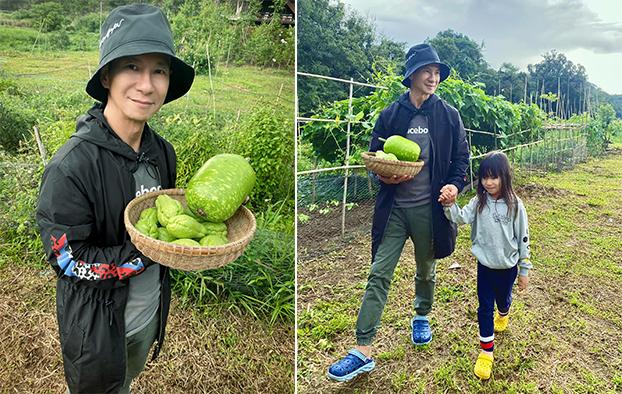 Lý Hải thu hoạch trái bầu và su su tại vườn.