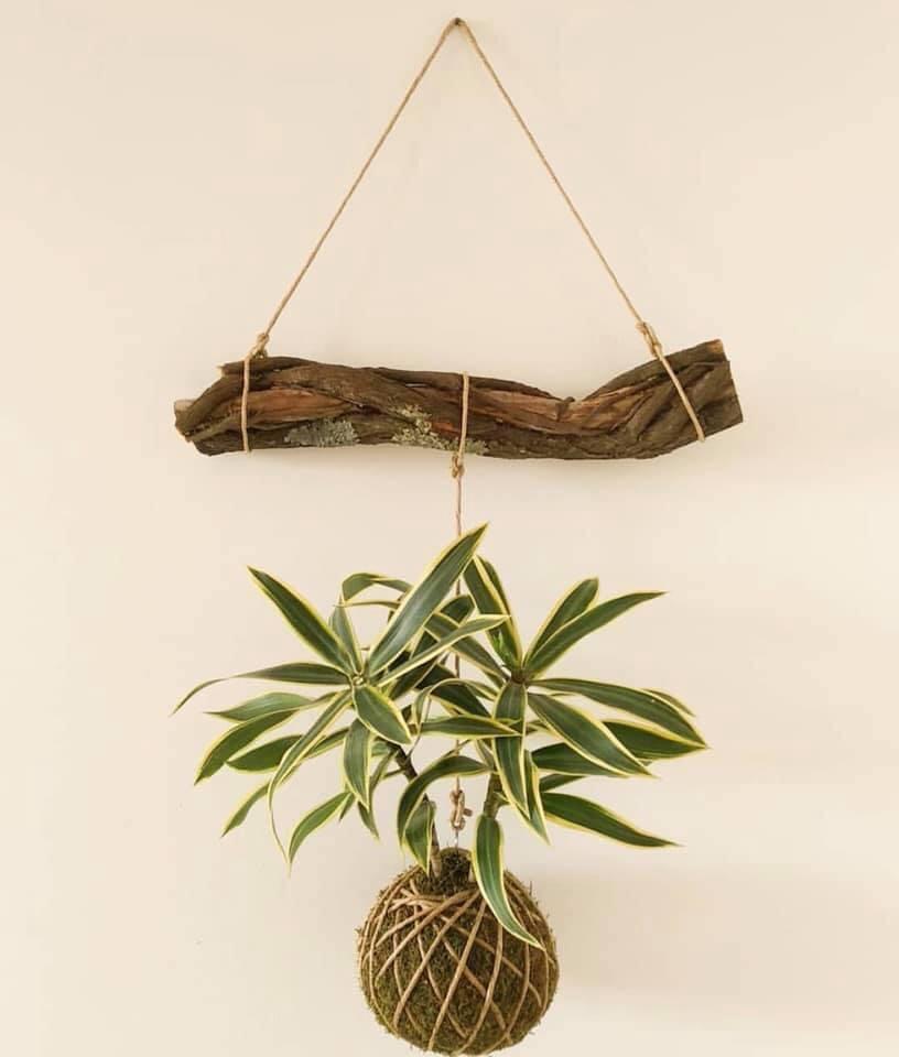 Từ cành củi khô, 2 anh em Tin đã cho ra đời tác phẩm treo cây trong nhà dễ thương(Ảnh nhân vật cung cấp)
