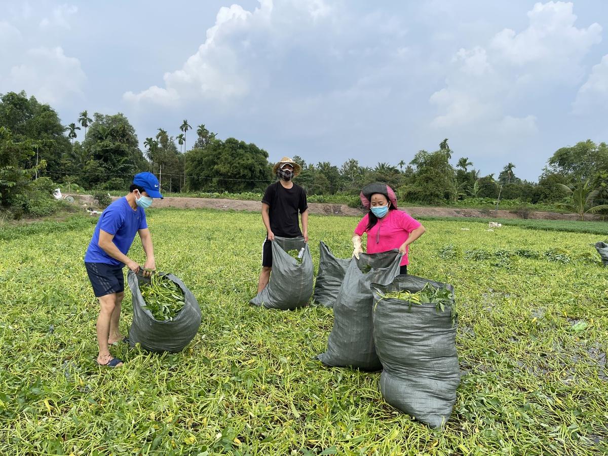 NTK Thuận Việt và bạn bè thu gom rau muống ở Hóc Môn.