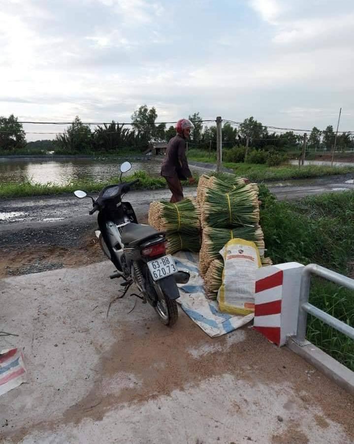 Vận chuyển sả từ ruộng ra bờ kênh phải đi qua đoạn đường gần chục km