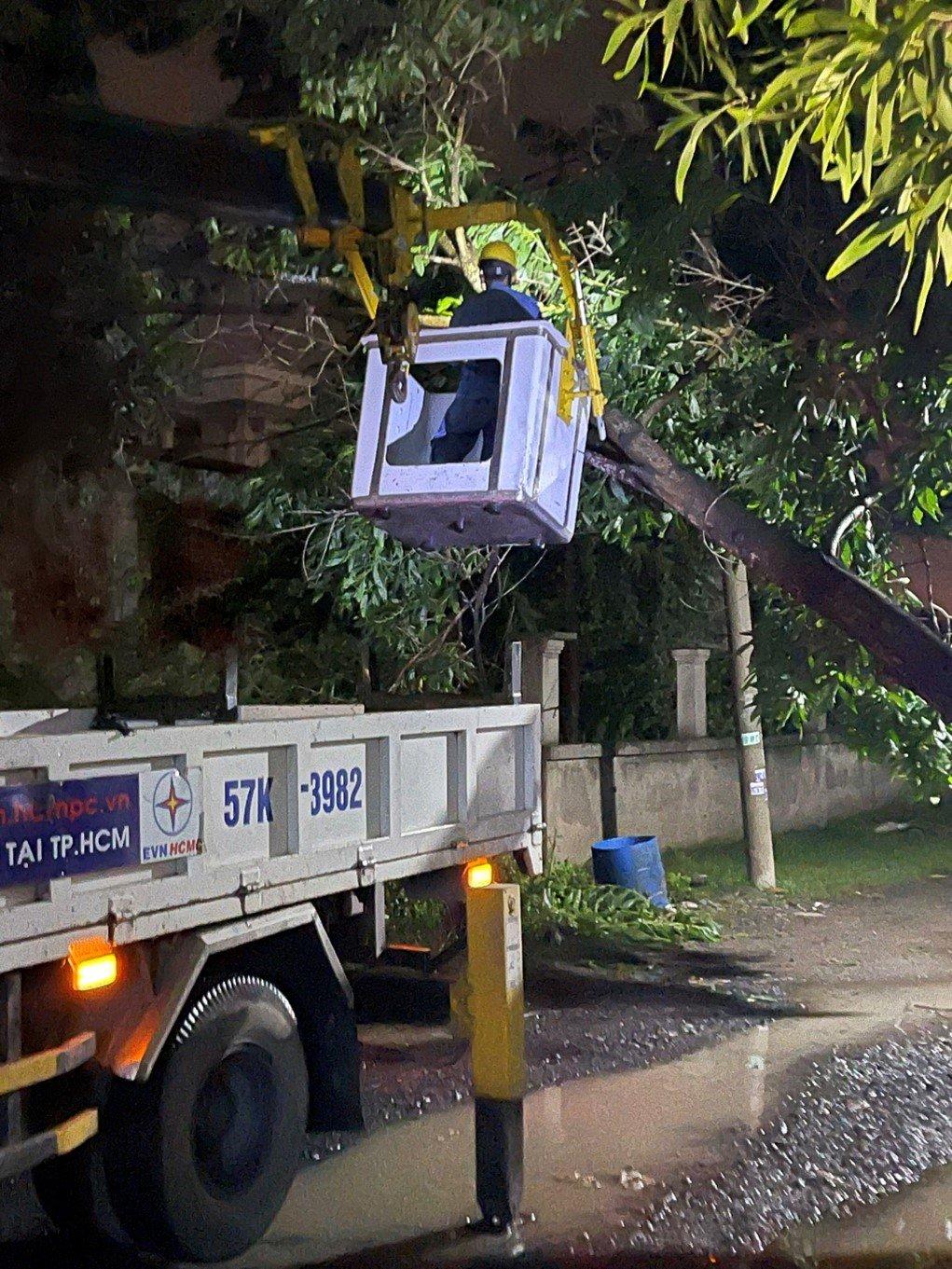 Công ty Điện lực Thủ Đức xử lý cây đổ ngay trong đêm - Hình ảnh do người dân cung cấp