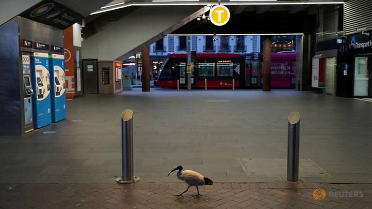 Một con chim đơn độc đi ngang qua ga xe lửa Circular Quay trong khi thành phố Sydney phong tỏa để hạn chế sự lây lan của COVID-19