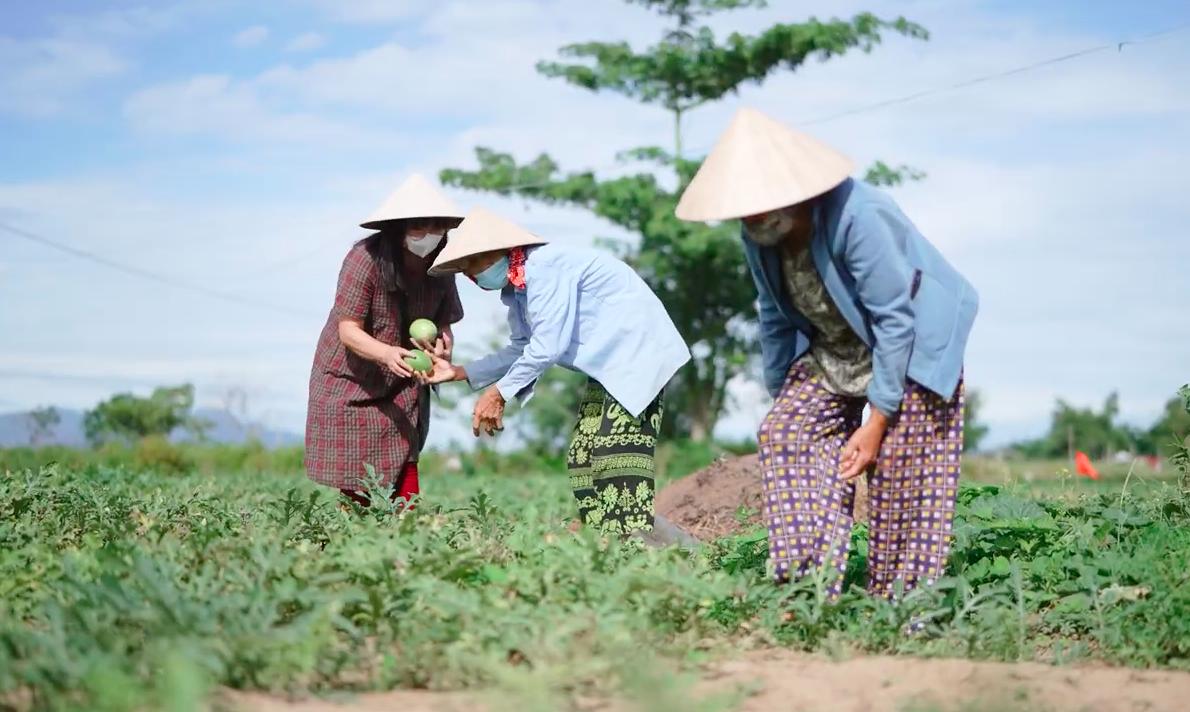 Ánh Tuyết thu hoạch dưa cùng với 2 người phụ nữ gửi vào nam