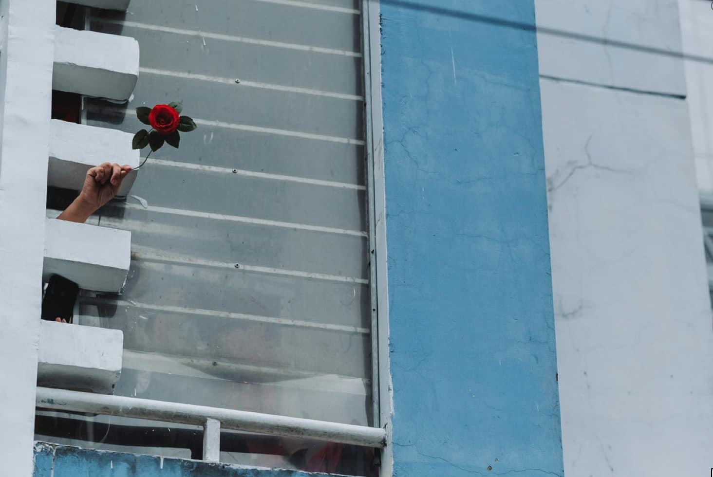 Hình ảnh bông hồng được bệnh nhân đưa ra từ khe cửa khiến Quỳnh Hoa xúc động