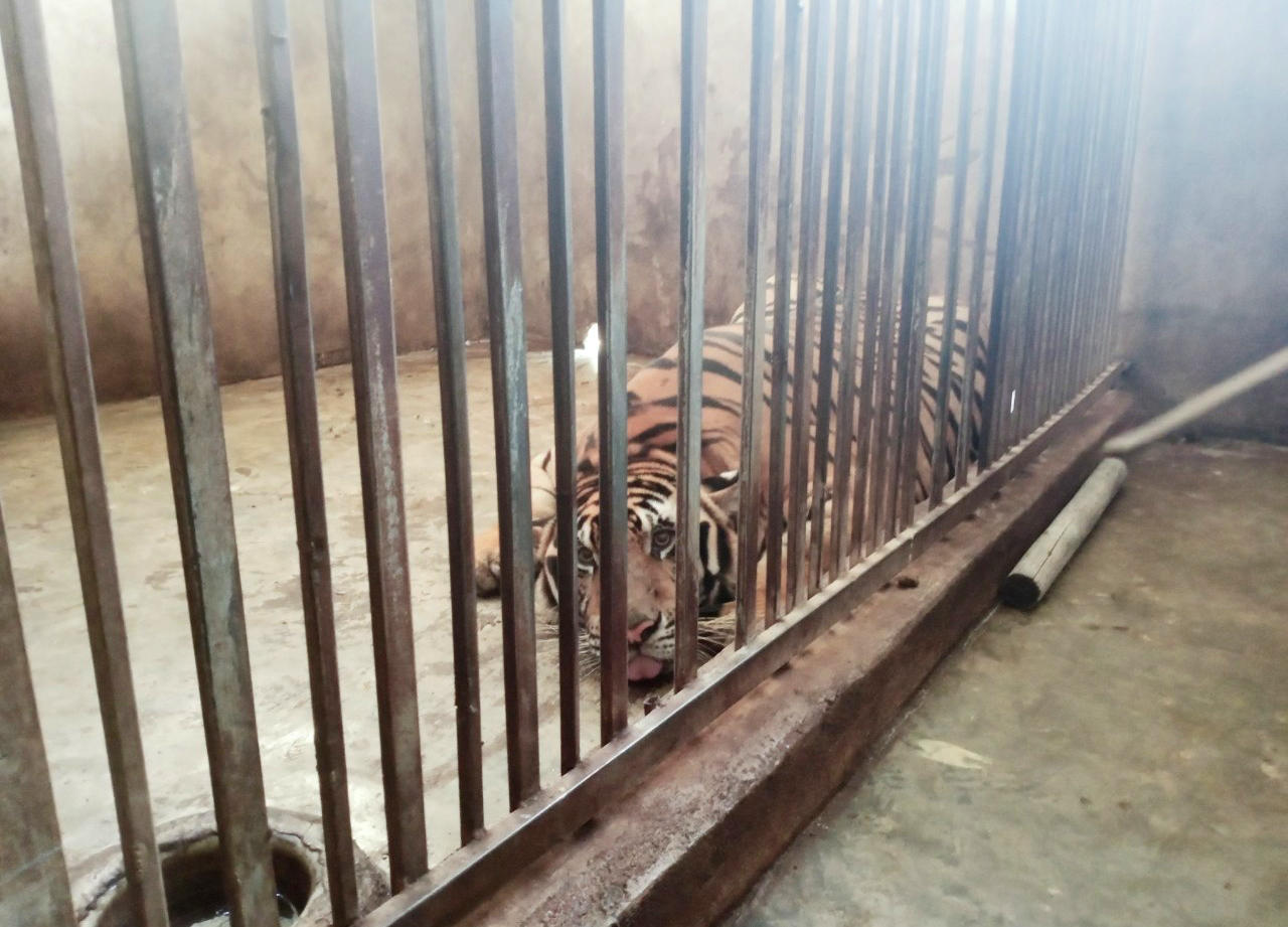 Hệ thống chuồng trại nuôi hổ được bao bọc bằng sắt xung quanh