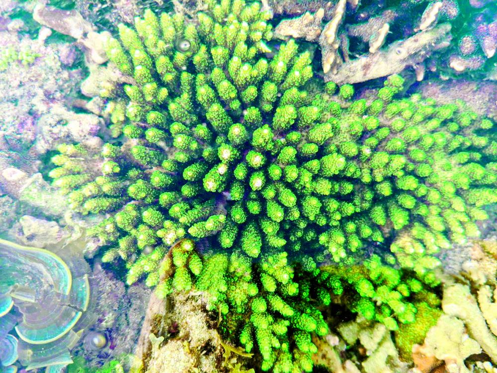 San hô là loài sinh vật nhạy cảm