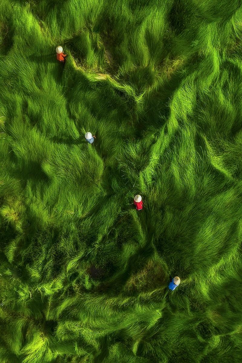 Tác giả Khánh Phan gửi dự thi bức ảnh Gặt cỏ, được chụp tại một cánh đồng cỏ năng ở Quảng Nam. Loại cỏ này được dùng làm thức ăn cho gia súc, ủ phân bón...